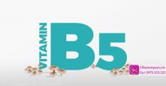 Công dụng và tác dụng của Vitamin B5